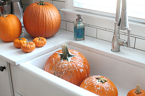 washingpumpkins FALLING FOR PUMPKINS