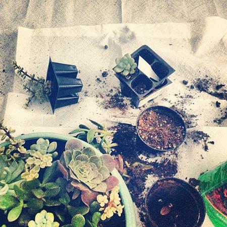 Succulent Terrarium / 7thhouseontheleft.com