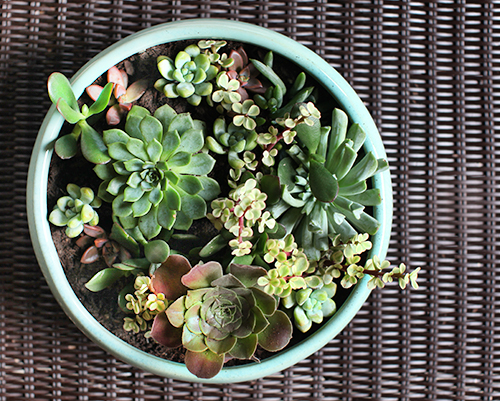 DIY Succulent Dish / 7thhouseontheleft.com